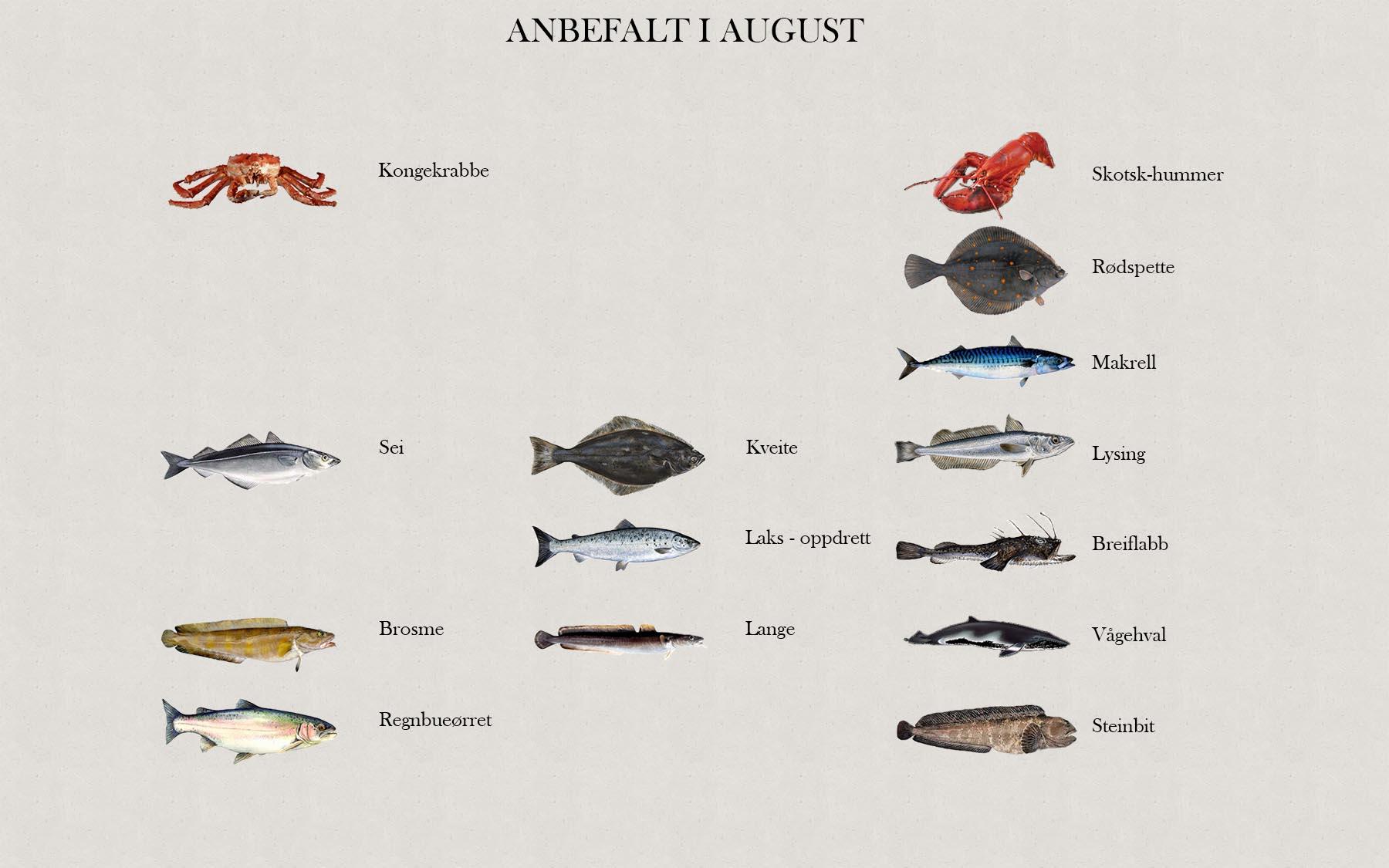 Fjelberg Fisk & Vilt. August