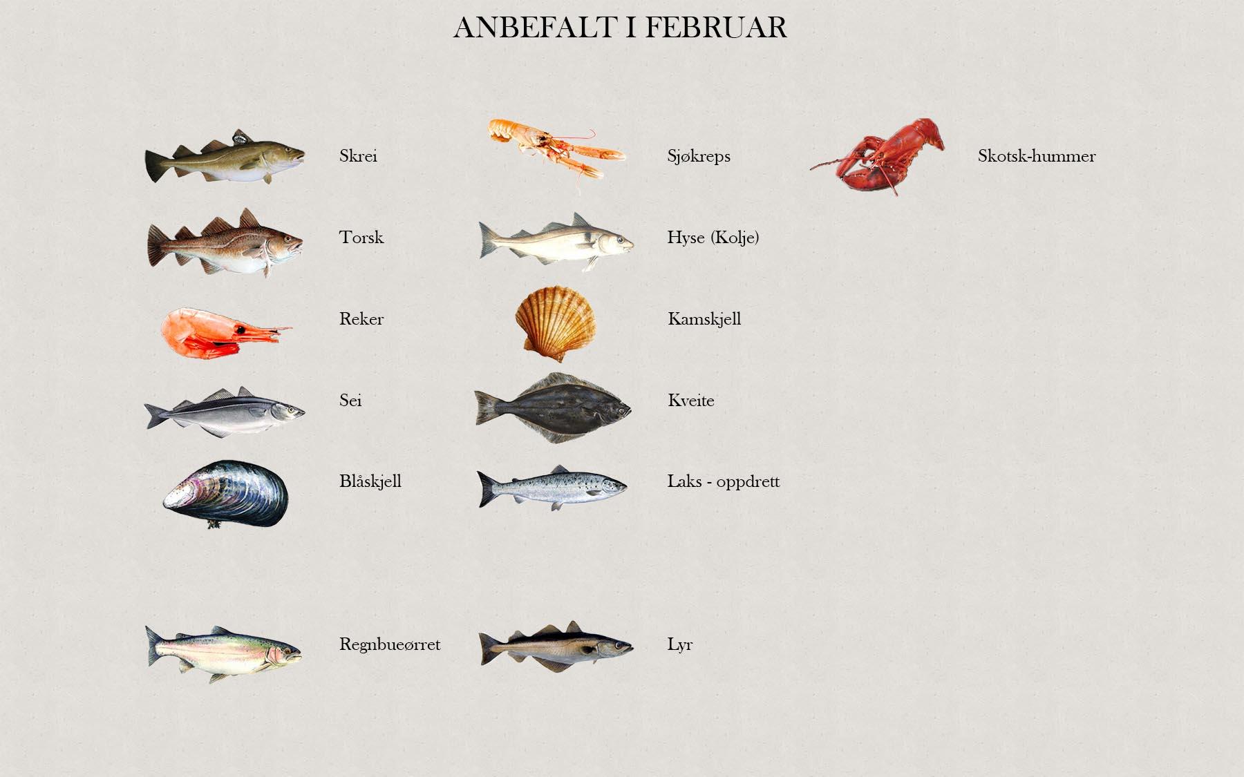 Fjelberg Fisk & Vilt. Januar