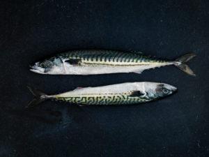 Fjelberg Fisk & Vilt. Makrell